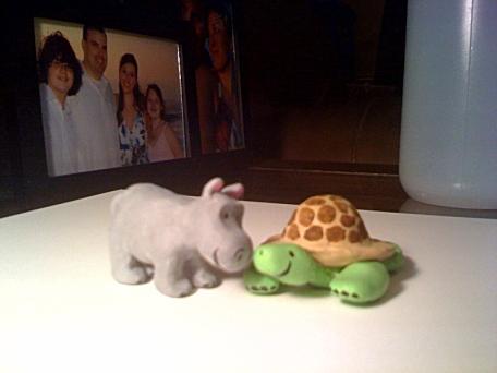 hippo_tortoise1