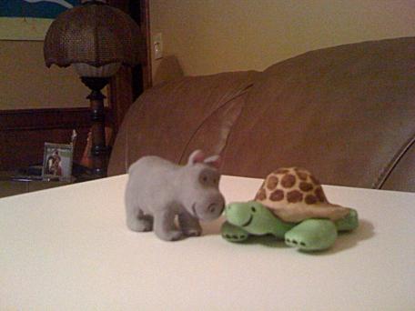 hippo_tortoise2